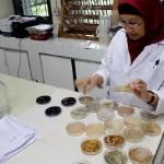 Peneliti Senior Bidang Mikrobiologi