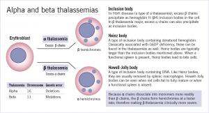 thalassemia-figure