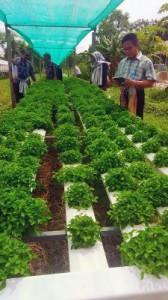 Penanaman Sayuran dengan Sistem Hidroponik