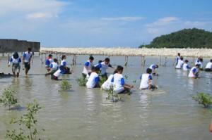 Penanaman mangrove di PontianakKompas/Chris Pudjiastuti (CP)Kompas Muda
