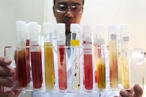 Bank Bakteri Fotosintesis