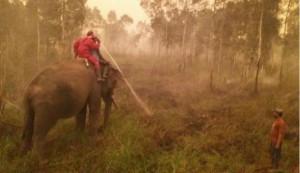 344491_gajah-di-sumatera-selatan-yang-ditugaskan-memadamkan-api_663_382