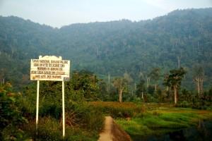 Board-Taman-Nasional-Gunung-Palung